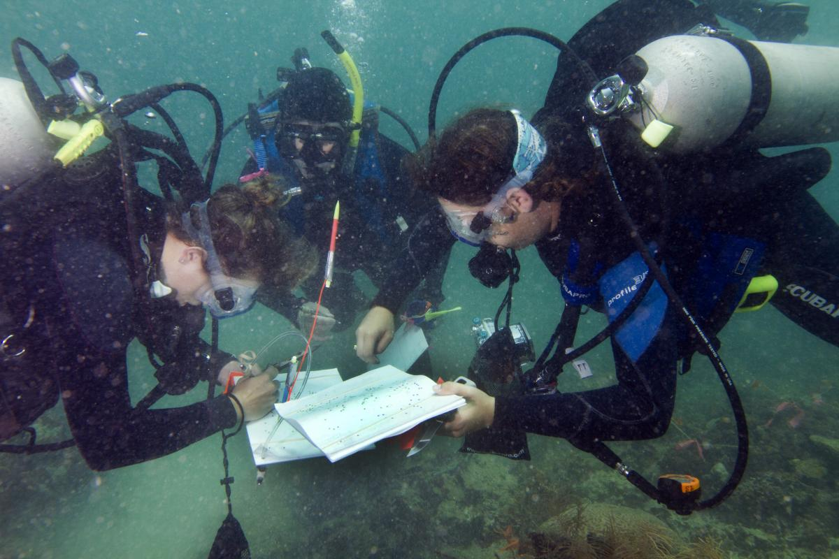 Science Divers comparing data in Panama