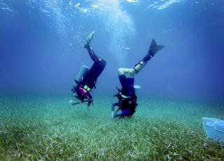 Planting Squid Pops in Sea Grass for MarineGEO